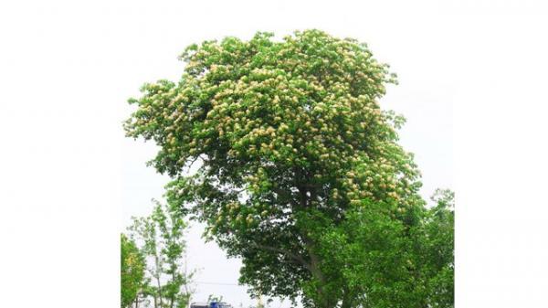 Quảng Bình: Mùa hoa Bún bên dòng Kiến Giang