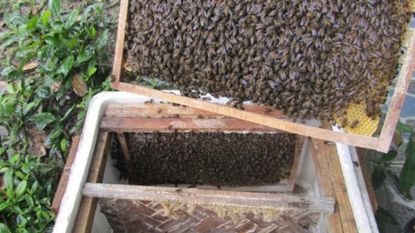 Tuyên Hóa: Sản lượng mật ong ước đạt 47 tấn