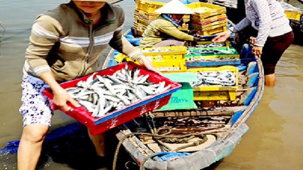 Mùa cá nục