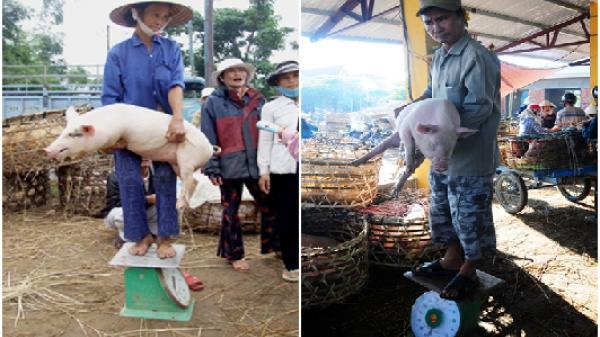 Thú vị với khu chợ Quảng Nam nơi lợn được coi như thú cưng