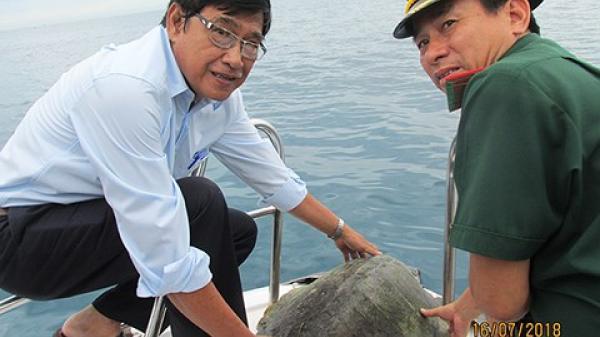 Đà Nẵng: Thả rùa biển quý hiếm nặng khoảng 30kg về lại môi trường tự nhiên