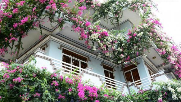 CHOÁNG NGỢP: ngôi nhà 3 tầng ngập sắc hoa giấy Singapore của người đàn ông yêu hoa ở Quảng Ngãi