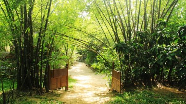Tận hưởng hương đồng gió nội ở làng Triêm Tây - xứ sở bình yên của xứ Quảng