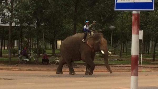 Góc khó tin: Xuất hiện clip ông bố đưa con đi học bằng voi khiến CĐM xôn xao