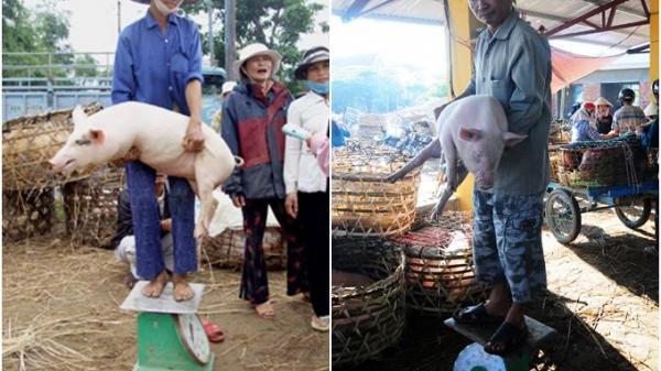 Thú vị với 1 khu chợ Quảng Nam nơi lợn được coi như thú cưng