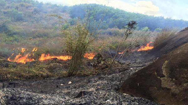 Quế Sơn: Một người chết cháy khi dọn dẹp rừng keo