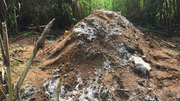 Cần Thơ: Dân hoang mang vì chôn heo chế.t gần khu dân cư