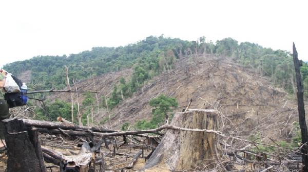 Khởi tố, bắt tạm giam đối tượng phá rừng phòng hộ Tiên Lãnh (Quảng Nam)