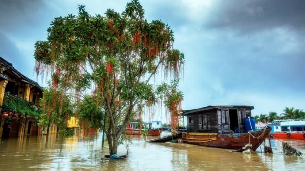 CHÙM ẢNH: Những ngày mưa lũ này, có một Hội An thật khác, vẫn thật đẹp mê mẩn trong lòng du khách