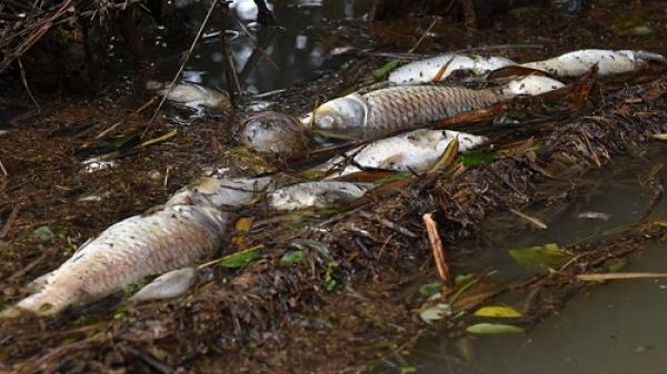 Nước sông Phủ (Quảng Ngãi) có nơi hàm lượng thủy ngân vượt mức cho phép