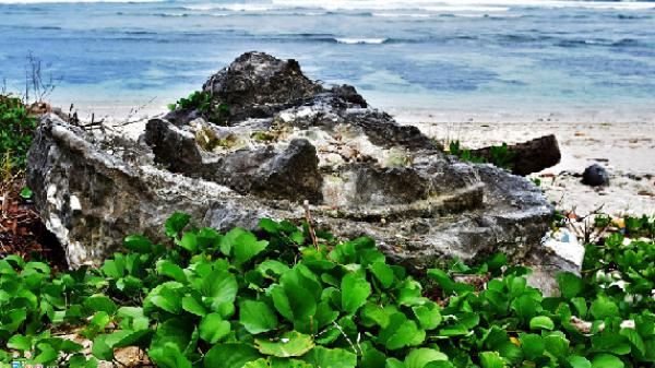 San hô hóa thạch hình bông hồng ở đảo Lý Sơn