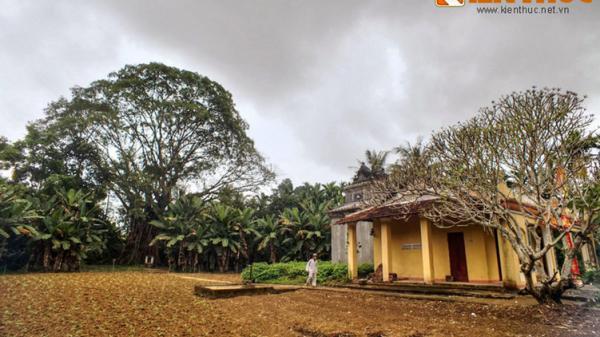 Cận cảnh cây đa khủng vòng thân 20 mét ở Nghĩa Hành (Quảng Ngãi)