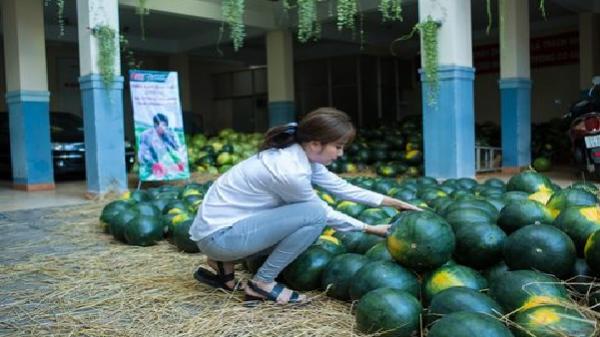 Hoa khôi Nam Em vận động cộng đồng mua dưa hấu giúp nông dân Quảng Ngãi