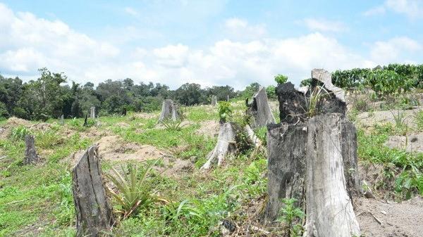 Tây Nguyên: 2 cán bộ bảo vệ rừng bị chém trọng thương