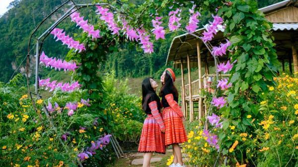 """Cách Hà Nội không xa có thung lũng hoa NÚI ĐÁ TRẮNG đẹp """"RỤNG TIM"""" đang nở rộ đón khách dịp lễ 2/9"""