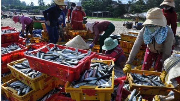 Video: Chợ hải sản đặc biệt ở Phước Thiện