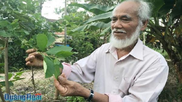 Quảng Ngãi: Bàn tay lá cỏ của vị lương y già