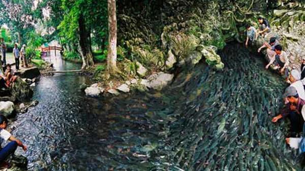 Thanh Hóa: Công nhận suối cá Thần Cẩm Lương là Khu du lịch cấp tỉnh