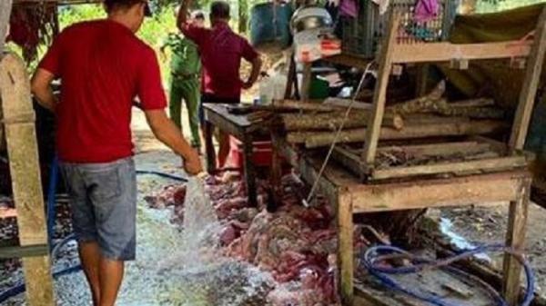 Tiêu thụ thịt, n ội tạng heo n hiễm bệnh: Phải quy đó là hành vi g iết người