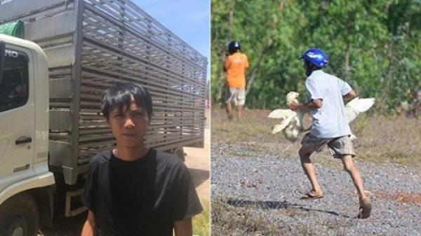 Vụ xe tải chở vịt lật tung tóe trên đường: 'Có người bắt đến chục con, lái xe chạy theo van xin mà không được'