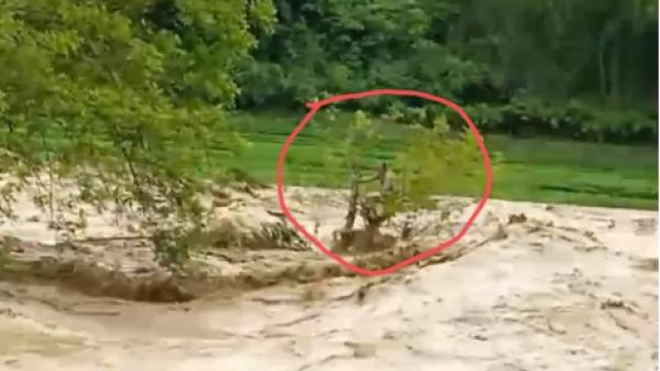 Thanh Hóa: Đang nỗ lực giải cứu người đàn ông bị lũ cuốn mắc kẹt trên cây