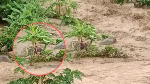 Thanh Hóa: Xót xa cảnh cụ ông bị lũ cuốn trôi, cụ bà sợ hãi giữa dòng nước lớn chờ người tới cứu