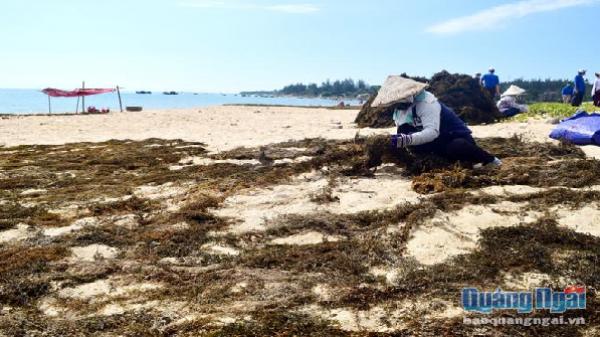 """Săn """"lộc"""", hủy diệt hệ sinh thái biển"""