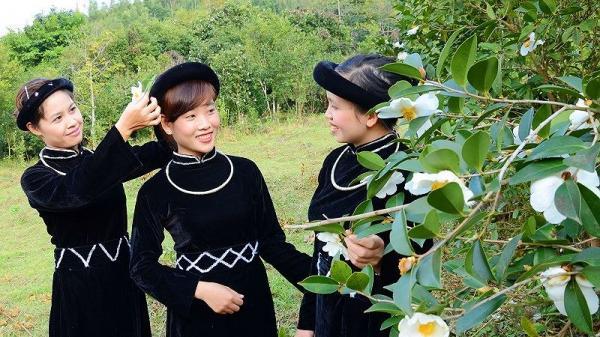 Quảng Ninh: Bình Liêu mùa hoa sở trắng muốt khiến bao du khách ngỡ ngàng