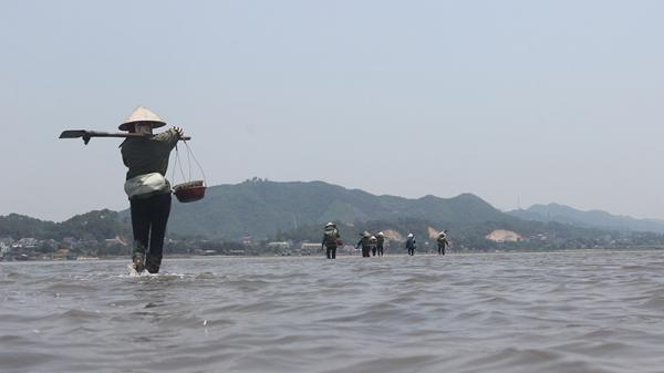 Quảng Ninh: Săn mì chính nhà giàu, tối ôm về tiền triệu