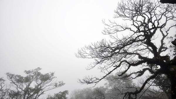 Từ đêm 28/1, không khí lạnh tăng cường, Quảng Ninh rét đậm, rét hại