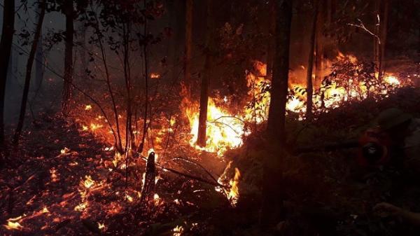 Quảng Ninh: Bốc cháy dữ dội ở rừng thông