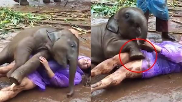 Cô gái âu yếm con voi, cảnh tượng vài giây sau đó khiến ai cũng há hốc