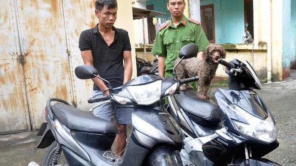 Uông Bí: 'Siêu trộm' xe máy và chó Nhật bị bắt khi đang ở cùng bạn gái