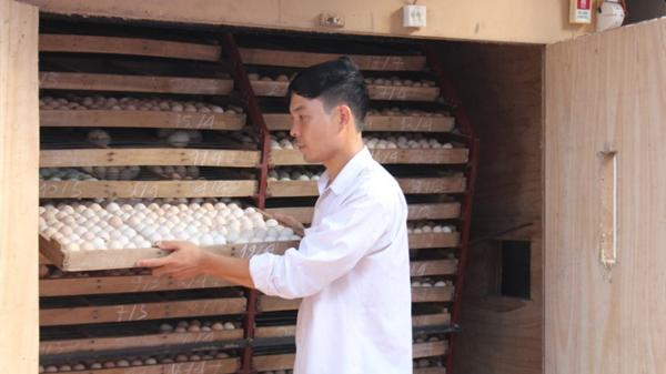 Kính nể thôn có nghề ấp trứng vịt lộn, doanh thu gần 200 tỷ đồng/năm