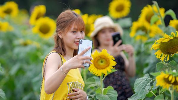 Giới trẻ náo nức check-in cánh đồng hoa hướng dương tuyệt đẹp ở xứ Huế