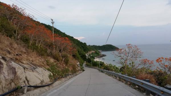 """Ngắm vẻ đẹp của loài cây được công nhận là """"cây di sản"""" trên xứ Cù Lao"""