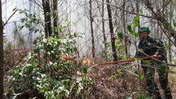 TT-Huế: Huy động hơn 1.000 người tham gia dập lửa, cứu rừng thông đặc dụng