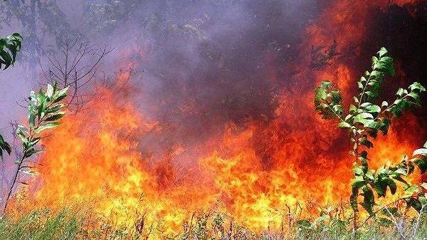 Thừa Thiên Huế: Cháy rừng dữ dội, hơn 500 người dồn sức dập lửa