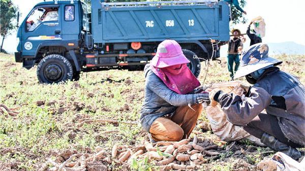 Quảng Trị: Tìm giải pháp tiêu thụ nông sản trong điều kiện COVID-19