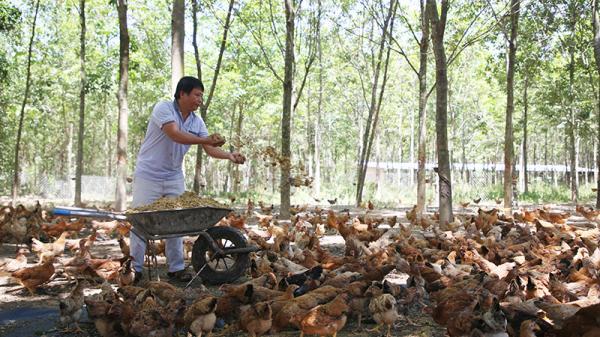 Phát triển chăn nuôi hữu cơ theo chuỗi khép kín cho thu nhập cao ở Vĩnh Linh