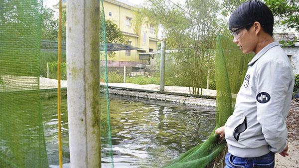 Chàng trai miền biển Quảng Trị đam mê nuôi cá nước ngọt