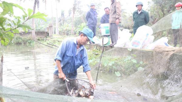 Thu nhập hàng trăm triệu đồng nhờ mô hình nuôi cá giống