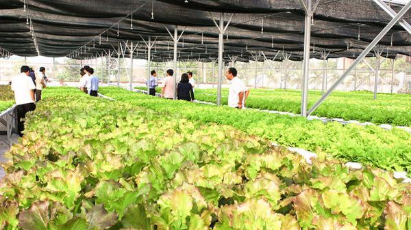 Quảng Trị: Một dự án nông nghiệp công nghệ cao hơn 3 năm chưa triển khai trên thực địa