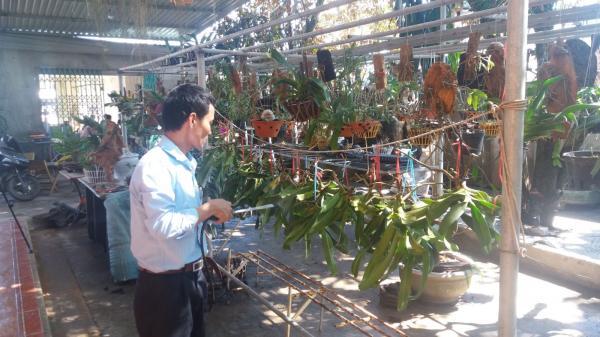 Đam mê trồng các loài lan của chàng trai Quảng Trị