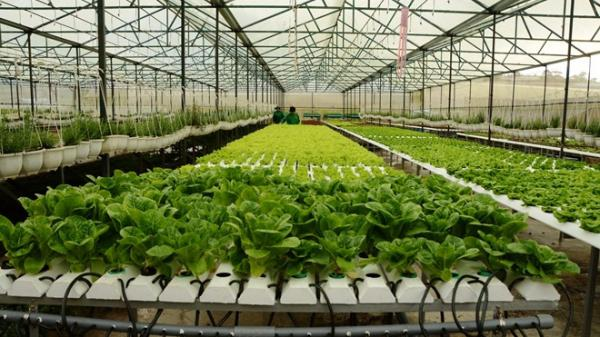 Quảng Trị: Trên 160 tỷ đồng đầu tư vào nông nghiệp công nghệ cao