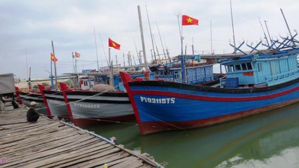 Thiếu lao động đi biển, nhiều tàu cá phải nằm bờ
