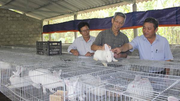 Hiệu quả từ mô hình nuôi thỏ ở Quảng Trị