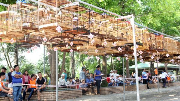 Đông Hà: Hội thi Chim Chào mào hót đấu mở rộng