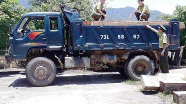 Quảng Trị: Phát hiện một vụ phá rừng quy mô lớn tại tiểu khu 659A