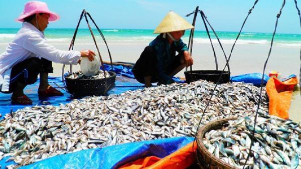 Bộ Y tế tuyên bố hải sản tầng đáy 4 tỉnh miền trung đã an toàn